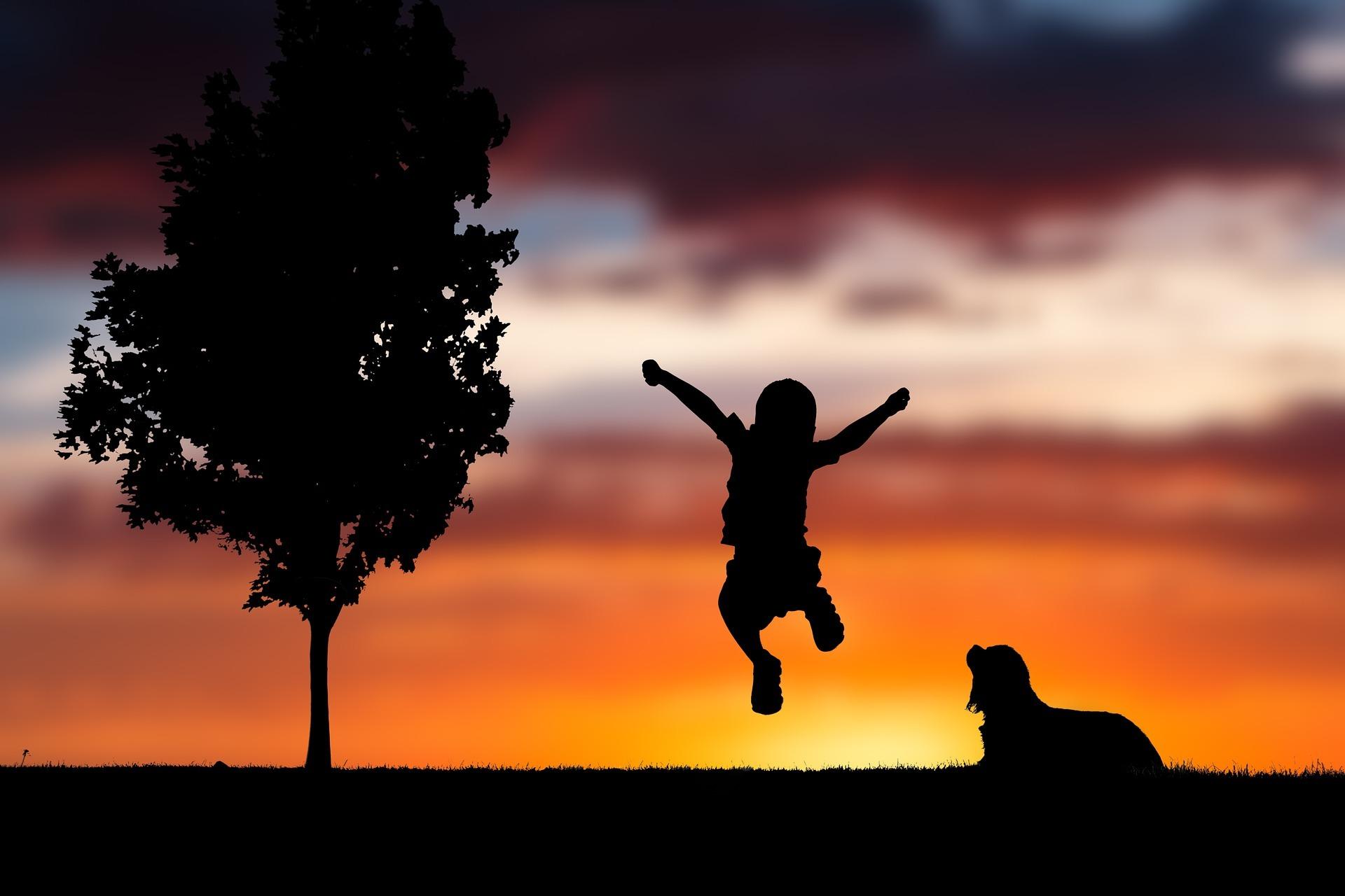 happy dog life