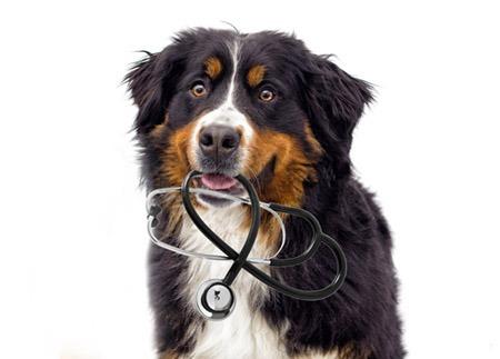medical Dog 410x440